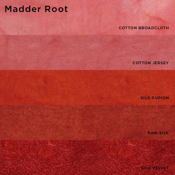 Natural Dyes (from plants and insects) - Madder Root
