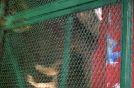 Cementerio de animales: la pesadilla continúa