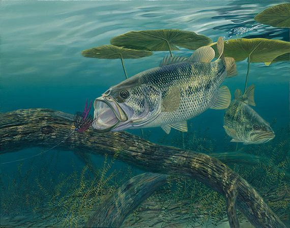 9 best largemouth bass fish paintings images on pinterest for Bass fish painting