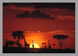 beautiful places: Dreams Places, Games Reservation, Maasai Mara, Dreams Vacations, Africans Safari, South Africa, National Parks, Lion King, Youghal