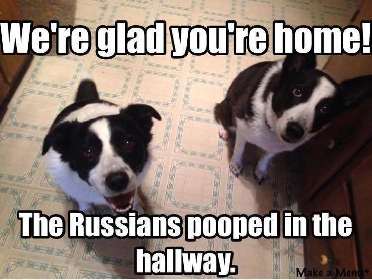 Image result for russians did it
