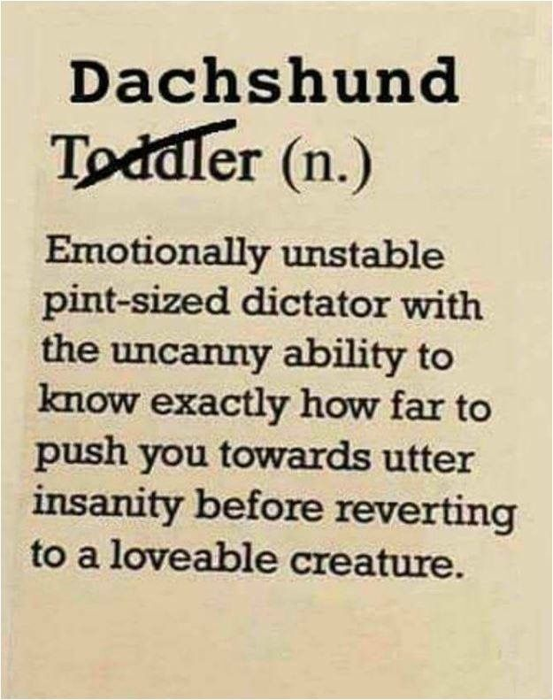 Dachshund (or toddler) definition! ==> visit http://www.amazingdogtales.com/gifts-for-dachsund-lovers/