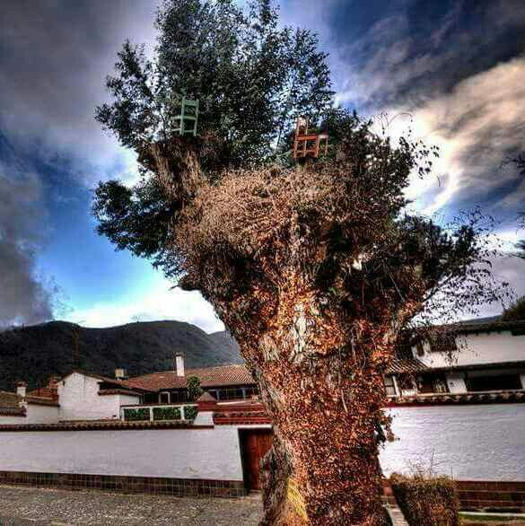 Floresilla Pamplona  Foto ajena