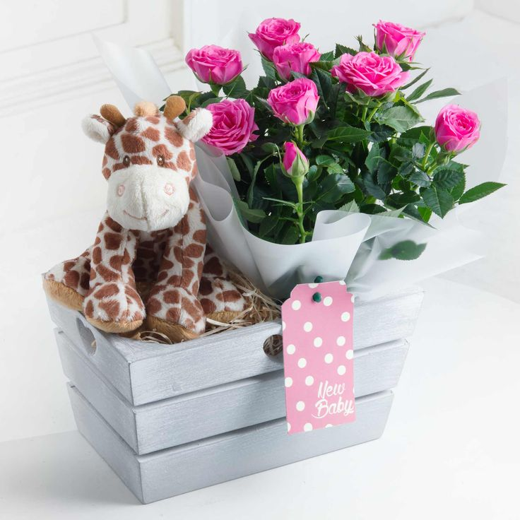 New Baby Gift with Giraffe Toy (Pink) - With a cute giraffe soft toy and pink rose plant, this is an ideal way to share in the joy of a new baby.