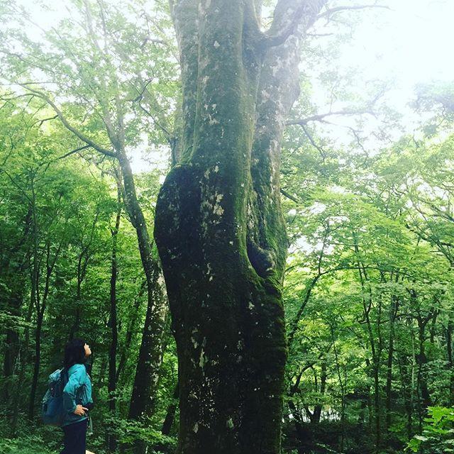 【shirleycioly】さんのInstagramをピンしています。 《白神山地十二湖健行 原始森林 ❤️ #jp #Hokkaido #travel #traveler #日本 #旅行 #青森 #白神山地 #十二湖 #健行 #hiking #原始林 #森林》
