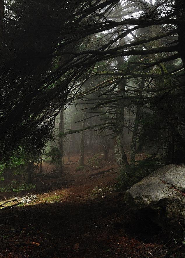 boxofmagicalmemories) #Misty #Wood