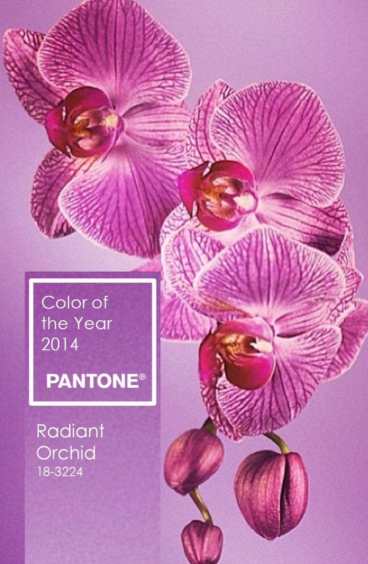 237 best Radiant Orchid | Color of the Year 2014 images on ...
