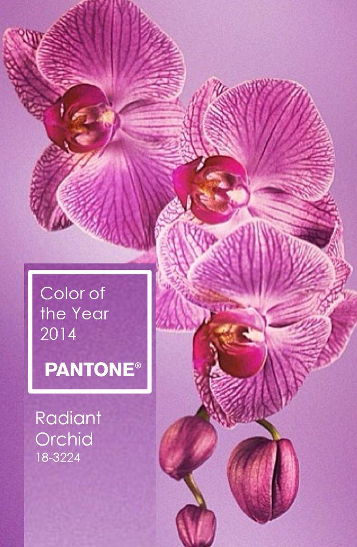 54 best Color Schemes images on Pinterest | Color palettes, Color ...