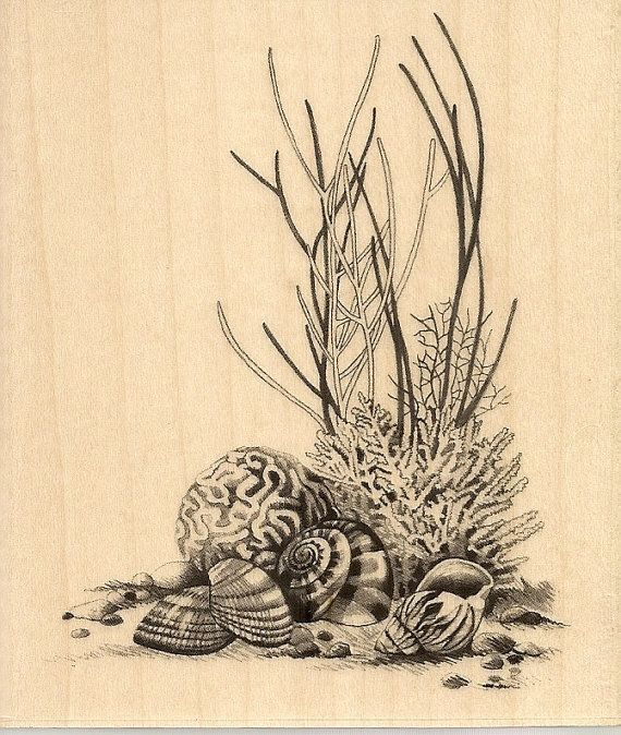 Inkadinkado SEALIFE CoRaL  Rubber Stamp SkeTcHeS SeAsHeLLs via Etsy