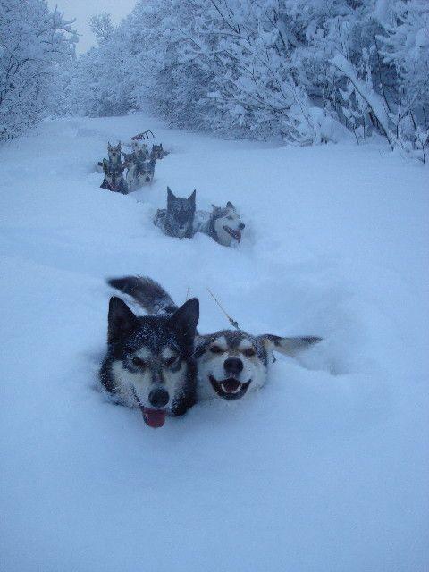 Sled dogs breaking trail over Eureka Dome, Ogilvie Mountains, Yukon, Canada