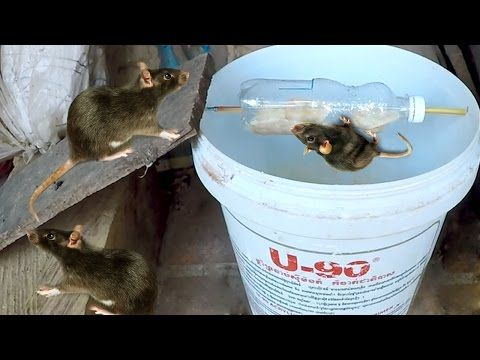 How To Make A Mouse Trap -Best Homemade Mouse Trap - YouTube