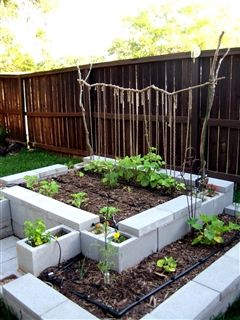 I like the design of this cinder block garden. Allows for planting things that might need deeper roots and more attractive than just a plain single square.