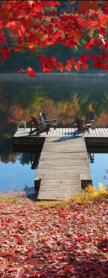 Colors of fall at Algonquin Provincial Park in Ontario, Canada • photo: Igor Laptev on Flickr