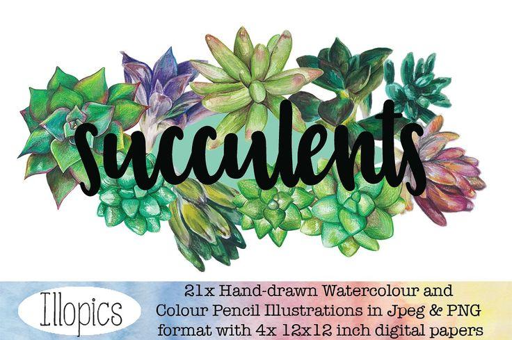Sweet little succulent illustrations
