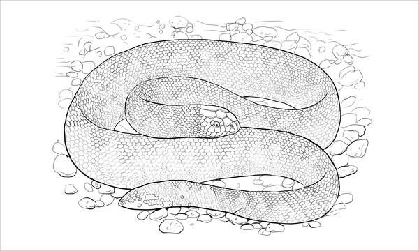 9 Realistic Snake Coloring Pages Jpg Psd Snake Coloring
