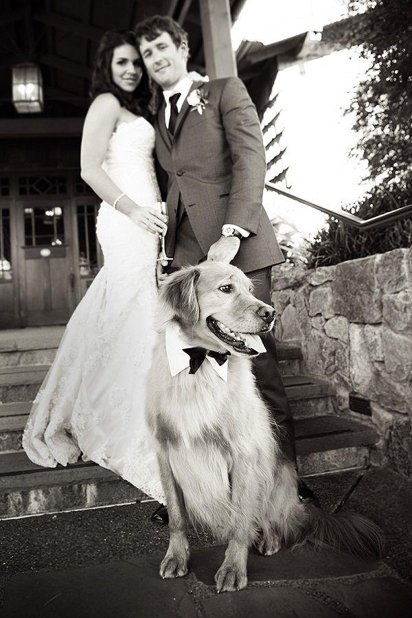 © Jules Bianchi Photography Golden Retriever, wedding dog. best dog