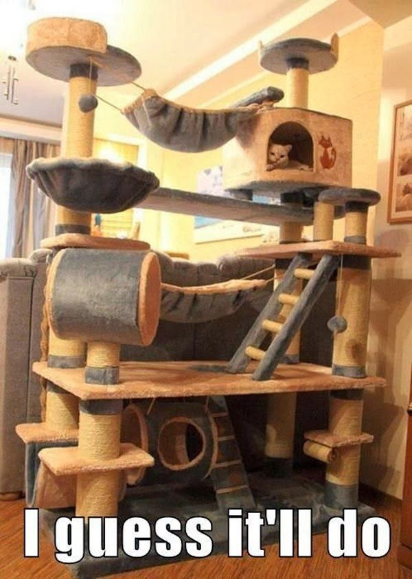 Haha...I would buy this for my cats.... or build it, since it would need to be strong enough not to  break if the boys climbed on it....which they would,  I'm sure.