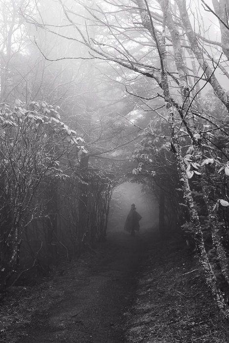 Tumblr  Vaughn Teegarden - Into the Faerie Wood