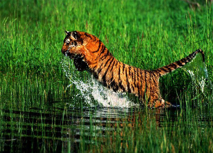Il Bangladesh seconda parte: verso il Rash Mela