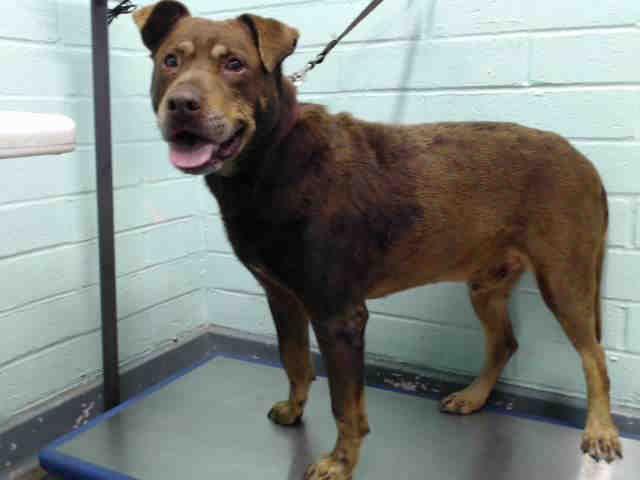Www Petharbor Com Pet Laco1 A5192382 Pets Animal Shelter Animals