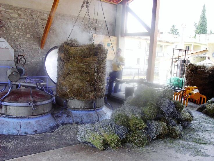 Lavender Essential Oil Distillation -   Bleu Provence - Nyons France