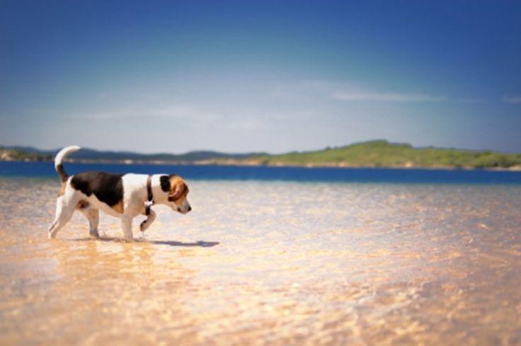 Συμβουλές για ξέγνοιαστα ταξίδια με τον σκύλο σας
