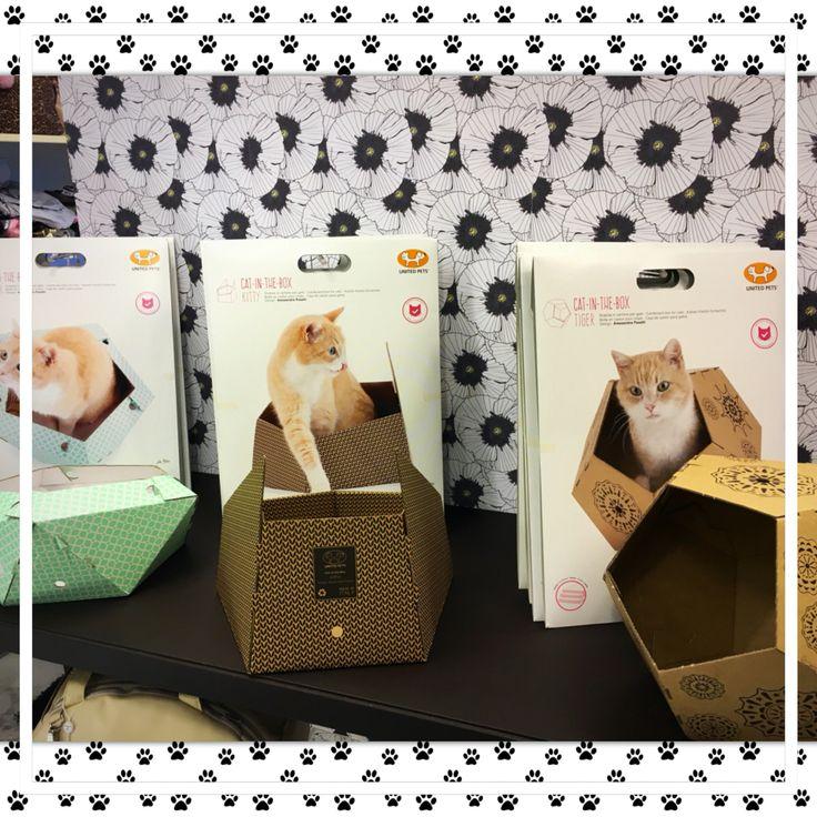 Nuove vetrine da Minu' Pet Shop Boutique Treviso