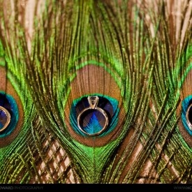 #Peacock ring photo ... Wedding ideas for brides & grooms, bridesmaids & groomsmen, parents & planners ... https://itunes.apple.com/us/app/the-gold-wedding-planner/id498112599?ls=1=8 ... The Gold Wedding Planner iPhone App ♥