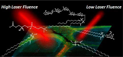 #AChem: Histology-Compatible MALDI Mass Spectrometry Based Imaging of Neuronal Lipids for Subsequent Immunofluorescent Staining #MassSpec