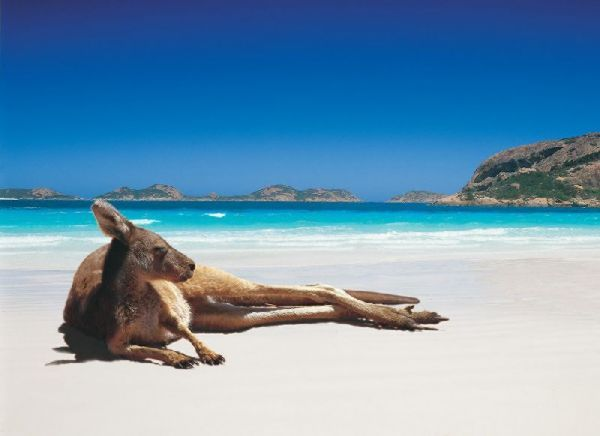 Australia: At The Beaches, Lucky Bays, Kangaroos, Australian Beaches, National Parks, Westernaustralia, Westerns Australia, Photo, Animal