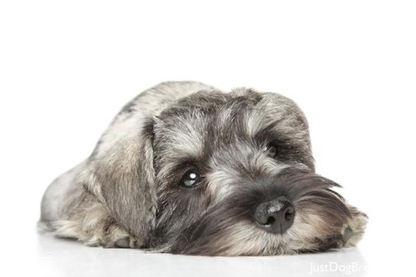 безнадзорные собаки загрызли собаку