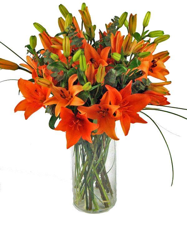 Lilium asiaticos, solo tu puedes sorprender!