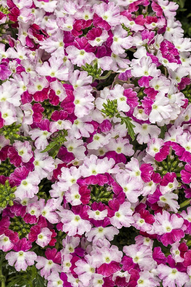 16 best cool plants images on pinterest | garden ideas, cool