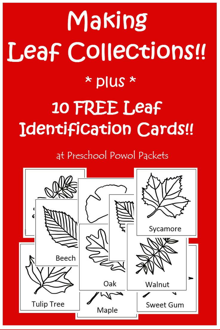 best 25 10 tree ideas on pinterest flowering crabapple tree