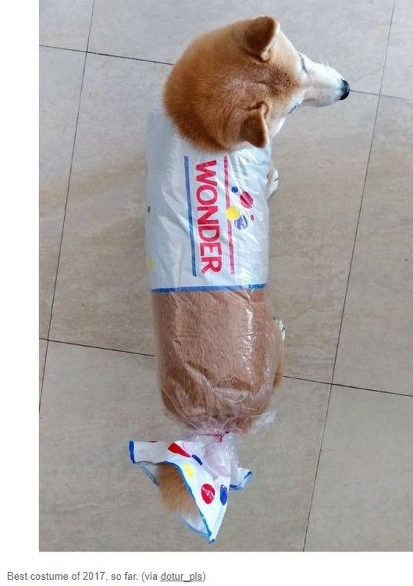 The Funniest Pictures Of Today S Internet With Images Cute Dog