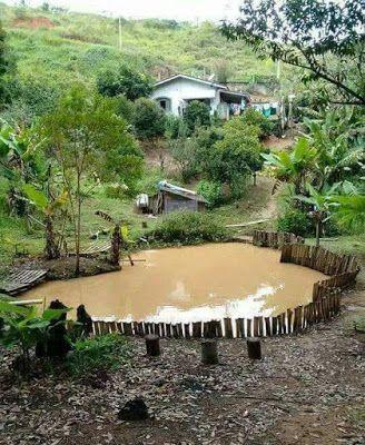Casa da lagoa de peixes Casas Casas de fazenda simples