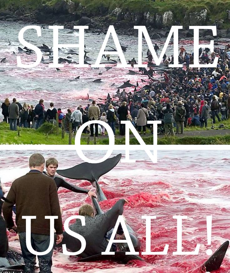 """This happens every year in Feroe Island in Denmark. The sea is stained in red and in the meanwhile it's not because of the climate effects of nature. It's because of the cruelty that human beings (""""""""civilized"""""""" humans) kill hundreds of the famous and intelligent Calderon dolphins. Animals are sentient beings. We must learn to treat them with dignity."""