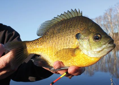 5-Fantastic-Float-Rigs-Feature-In-Fisherman