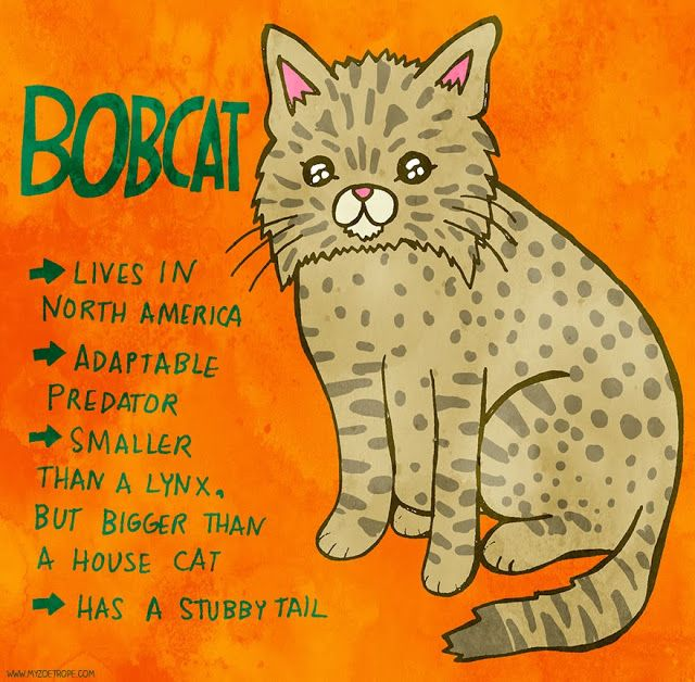 365 Days of Animals 311: Bobcat Pen/Ink/Digital