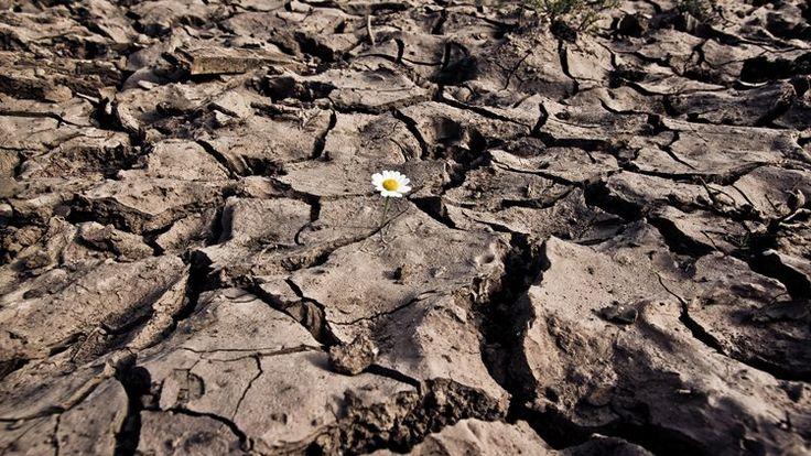 El cambio climático lidera el informe mundial de riesgos 2016.  En el Informe Mundial de Riesgos 2016 han participado 175 expertos que evaluaron 29 riesgos potenciales globales separando el impacto y la probabilidad en un horizonte temporal de 10 años.