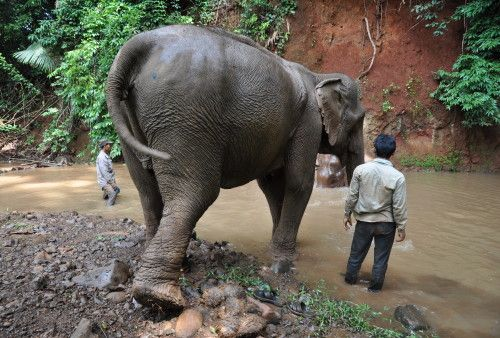 Elephant Valley Project | Eco-Tourism | Volunteer Cambodia Elephant Forest Conservation | Visit Options