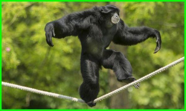 Hewan Berkaki Dua Bipedal Dan Contohnya Dengan Gambar Hewan