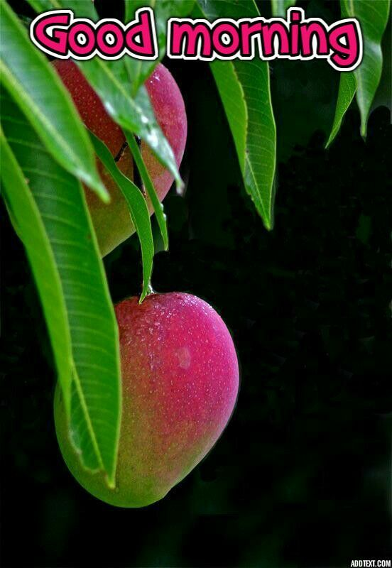 Good Morning New Image Good Morning Images New Fruit Costa Rico