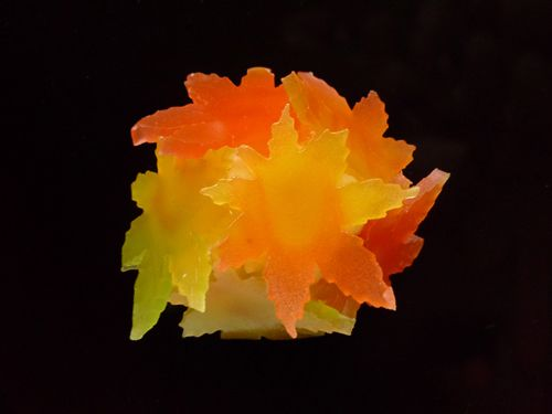 Colored Leaves Hunting  二條若狭屋「もみじ狩り」