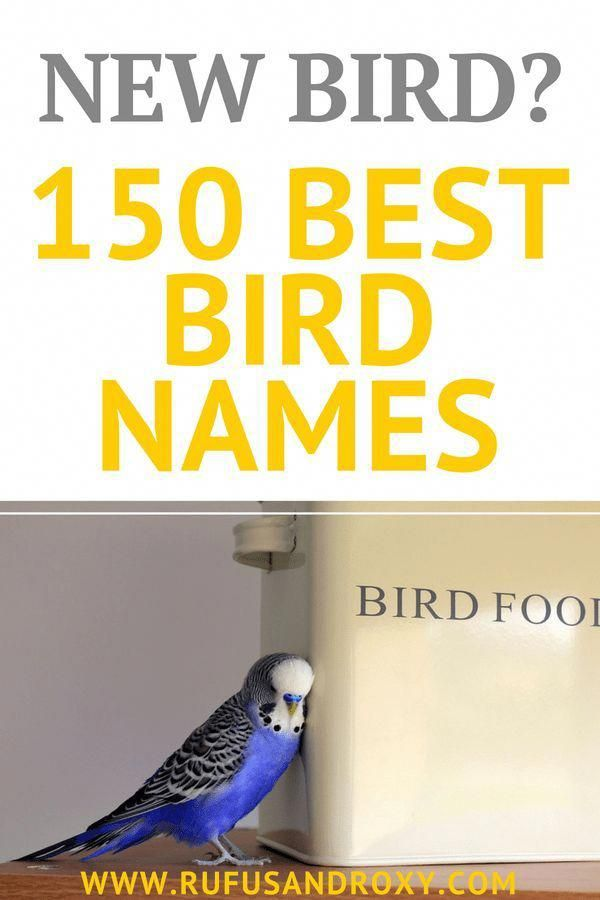 150 Best Bird Names - This MASSIVE list of bird names will help you