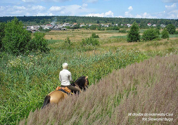 """W drodze do rezerwatu Cisa/On the way to the reserve """"Cis"""" fot. Sławomir Buga Koń Polski"""