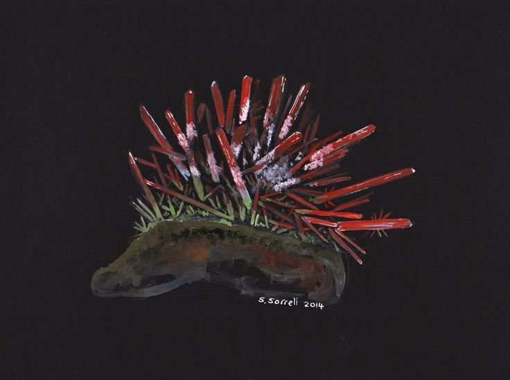 Steve Sorrell Artwork: Crocoite with dundasite and gibbsite, Adelaide Mine, Dundas, Tasmania. The original will be going with me to Tucson in a few weeks. Gouache on black card.