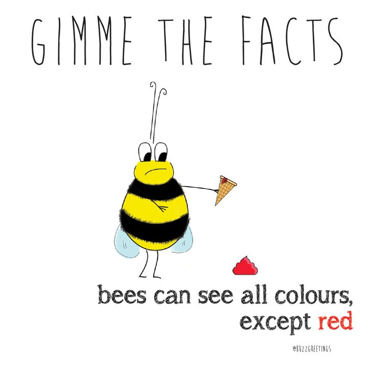 GIMME THE FACTS - Bee Facts. Bees are so important! That's why Buzz Greetings gives $1 to SAVE THE BEES Australia for every purchase made on their Etsy store. buzzgreetings.etsy.com OR follow bee @Buzz Greetings on Instagram. For more about SAVE THE BEES Australia go to beethecure.com.au. Bees can see all colours, except Red