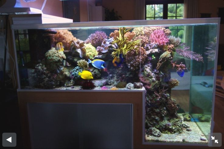 Step down reef aquarium saltwater fish tank reef tanks for Marine fish tanks