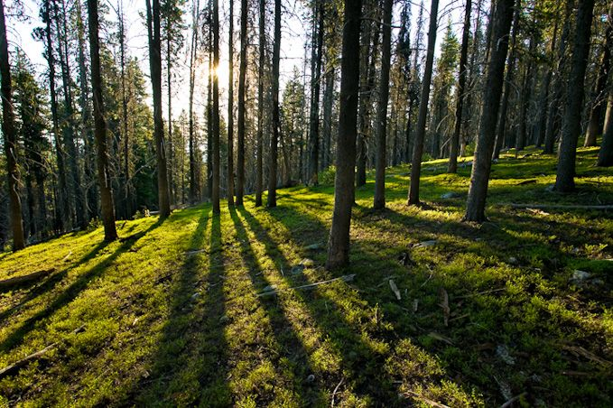 north american forests   bing images north american forests pinterest